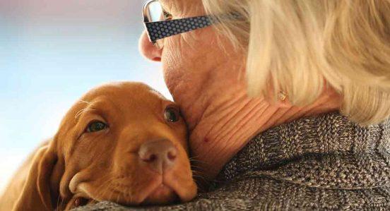 perro ideal para adultos mayores